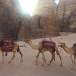 camel train in the desert of the Wadi Rum, Jordan