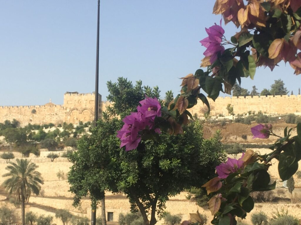 Old City wall from the Garden of Gethsemane